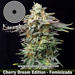 Cherry Dream Edition
