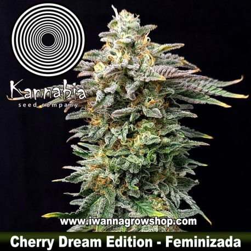 Cherry Dream Edition