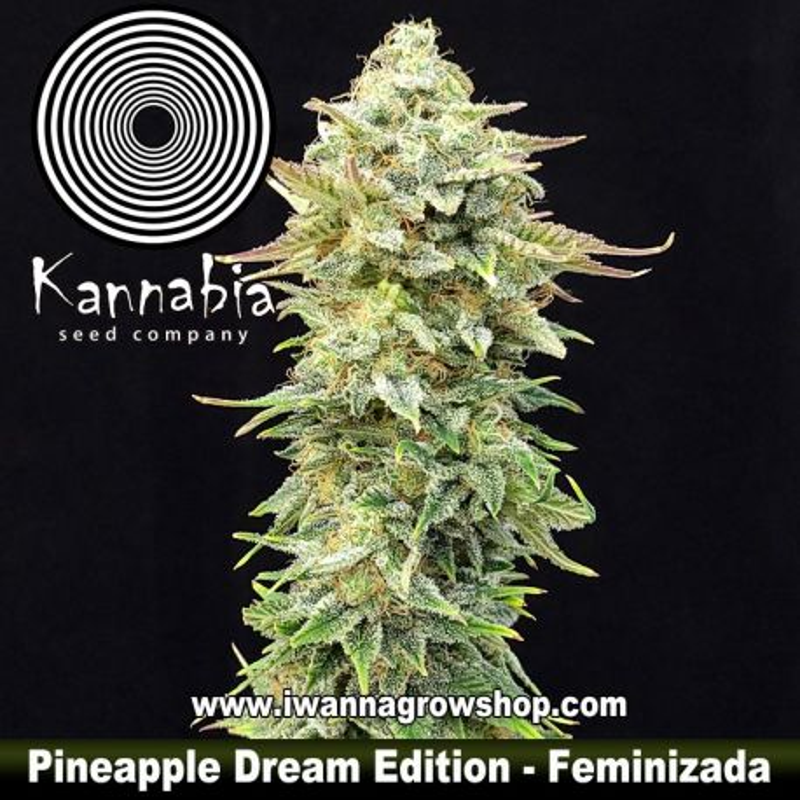 Pineapple Dream Edition