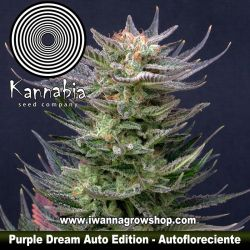 Purple Dream Auto Edition