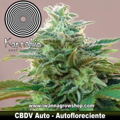 CBDV Auto