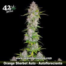 Orange Sherbet Auto