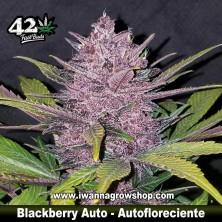 Blackberry Auto
