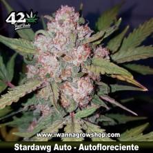 Stardawg Auto