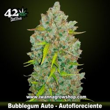 Bubblegum Auto