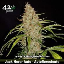 Jack Herer Auto