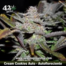 Cream Cookies Auto