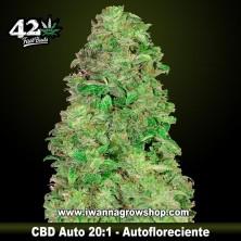 CBD Auto 20:1