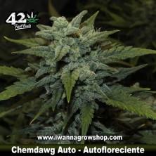 Chemdawg Auto