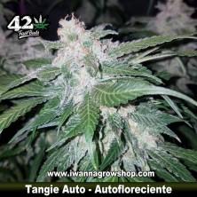 Tangie Auto