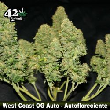 West Coast O.G. Auto