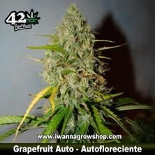Grapefruit Auto