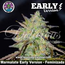 Marmalate Early Version