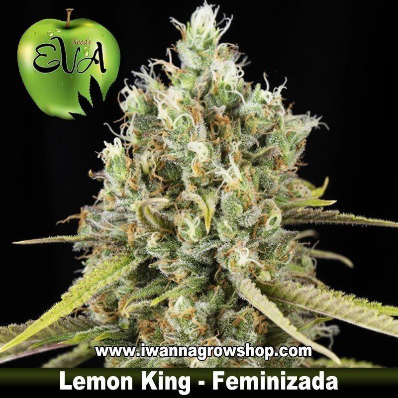 Lemon King