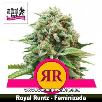Royal Runtz