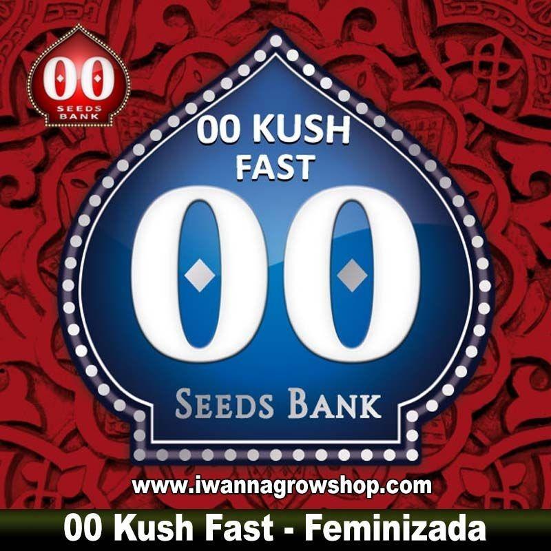 00 Kush Fast