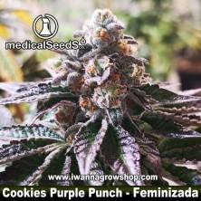 Cookies Purple Punch