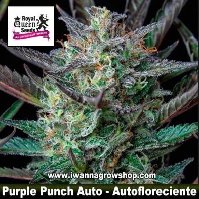 Purple Puch Auto