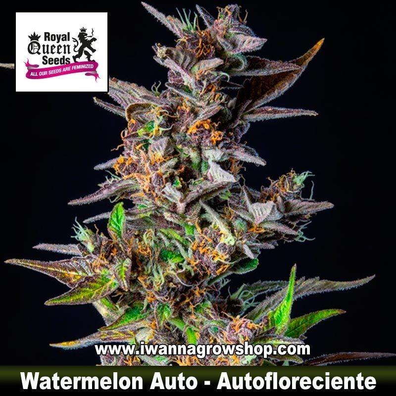 Watermelon Auto