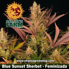 Blue Sunset Sherbet
