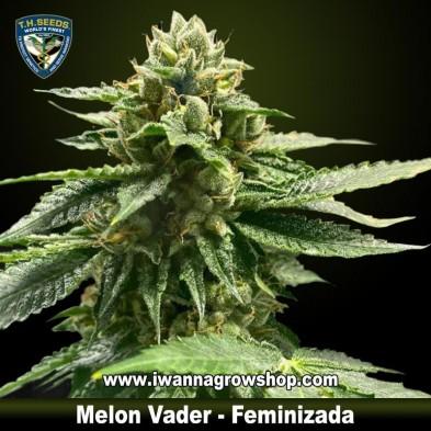 Melon Vader