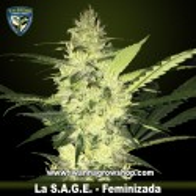 LA S.A.G.E.