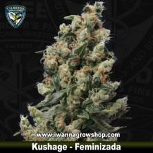Kushage
