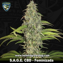 S.A.G.E. CBD