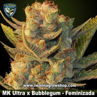 MK Ultra x Bubblegum