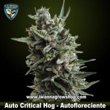 Auto Critical Hog