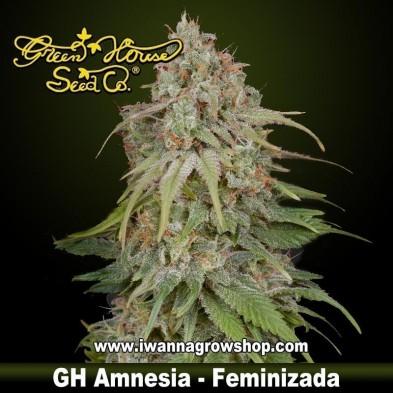 GH Amnesia