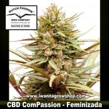 CBD ComPassion