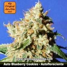 Auto Blueberry Cookies
