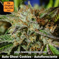 Auto Ghost Cookies