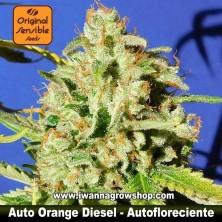 Auto Orange Diesel