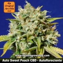 Auto Sweet Peach CBD