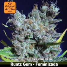 Runtz Gum