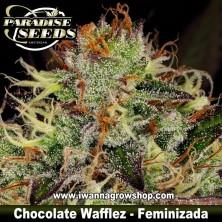 Chocolate Wafflez