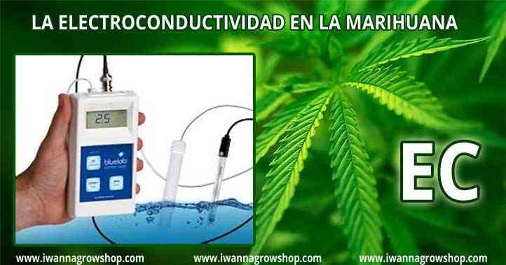 La Electroconductividad EC en el cultivo de marihuana