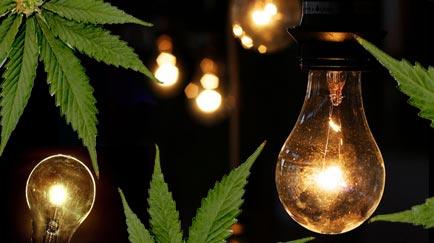 Luz artificial para plantas de marihuana