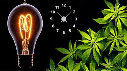 Cuántas horas de luz necesita una planta de marihuana