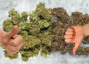 Cómo saber si la marihuana es buena