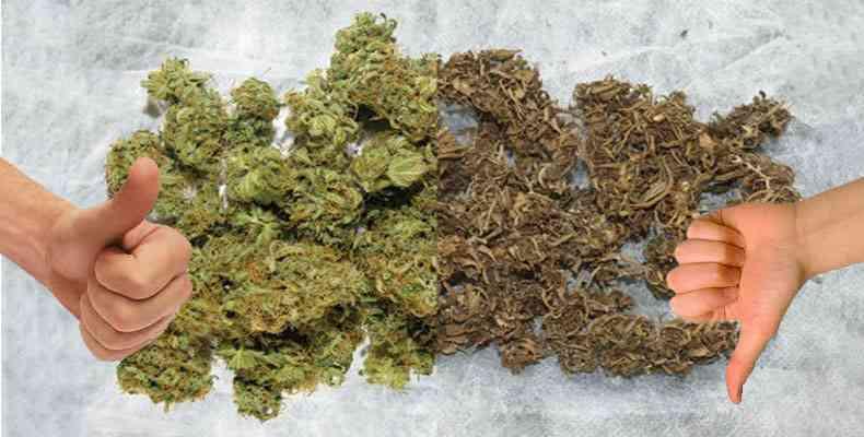como saber si la marihuana es buena