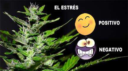 el estres en la marihuana