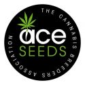 Ace Seeds Regulares