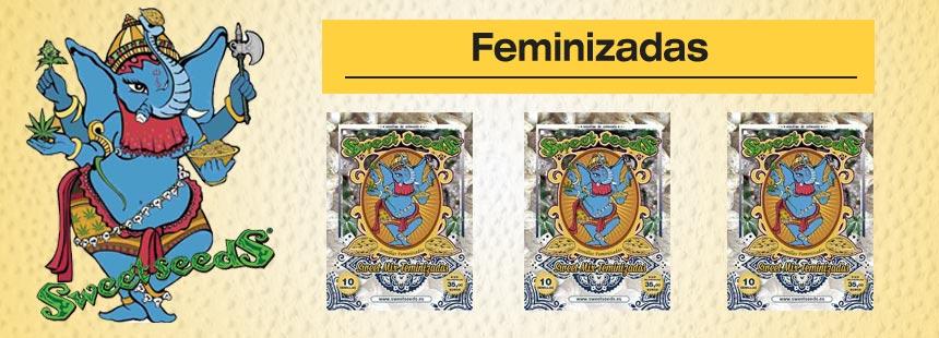 sweet seeds feminizadas