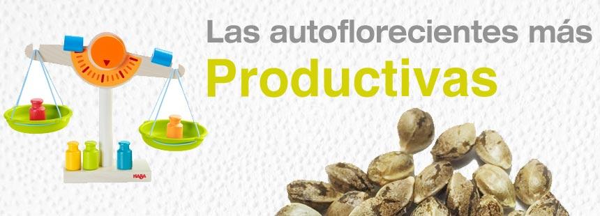 autoflorecientes productivas
