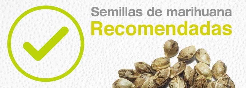 semillas de maria recomendadas
