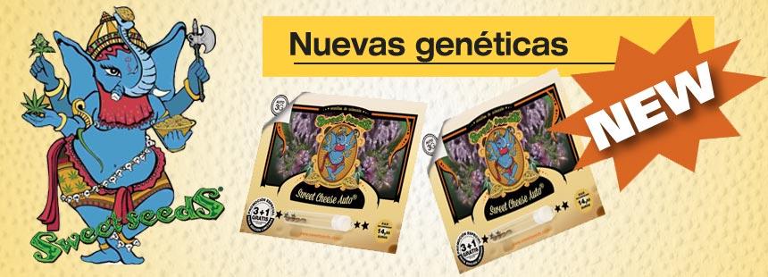 nuevas geneticas de sweet seeds